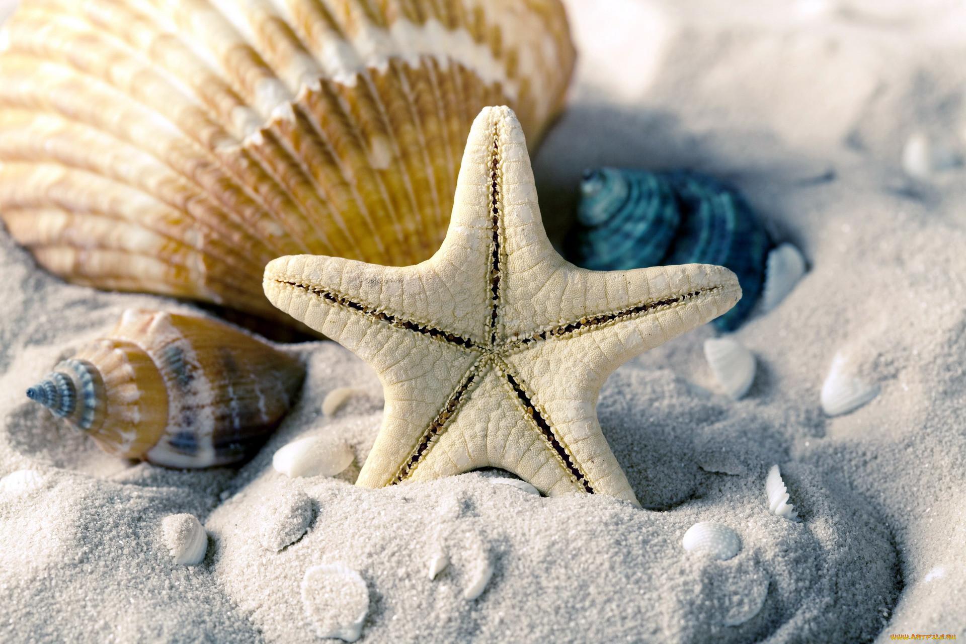 знак ладони смешные картинки фото морская тема пейзажном